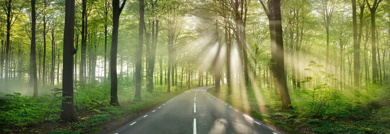 Alternativa bränslen utgör en viktig del av Volvo Lastvagnars strategi för hållbara transporter.